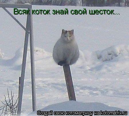 Котоматрица: Всяк коток знай свой шесток...