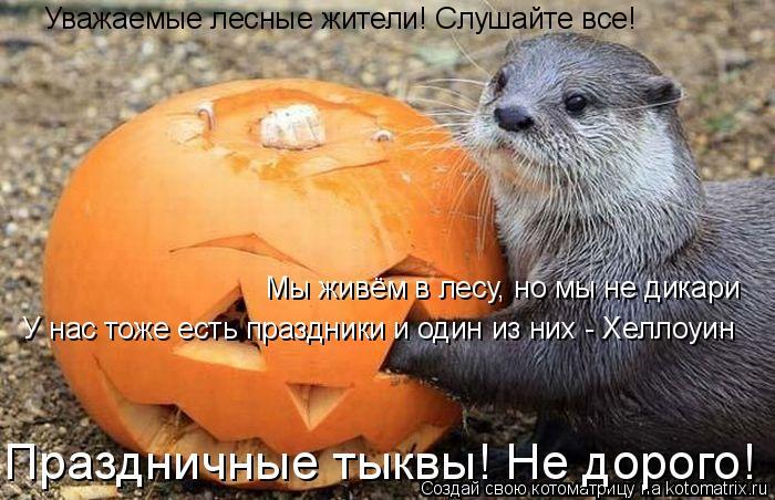 Котоматрица: Уважаемые лесные жители! Слушайте все! Мы живём в лесу, но мы не дикари У нас тоже есть праздники и один из них - Хеллоуин Праздничные тыквы! Н