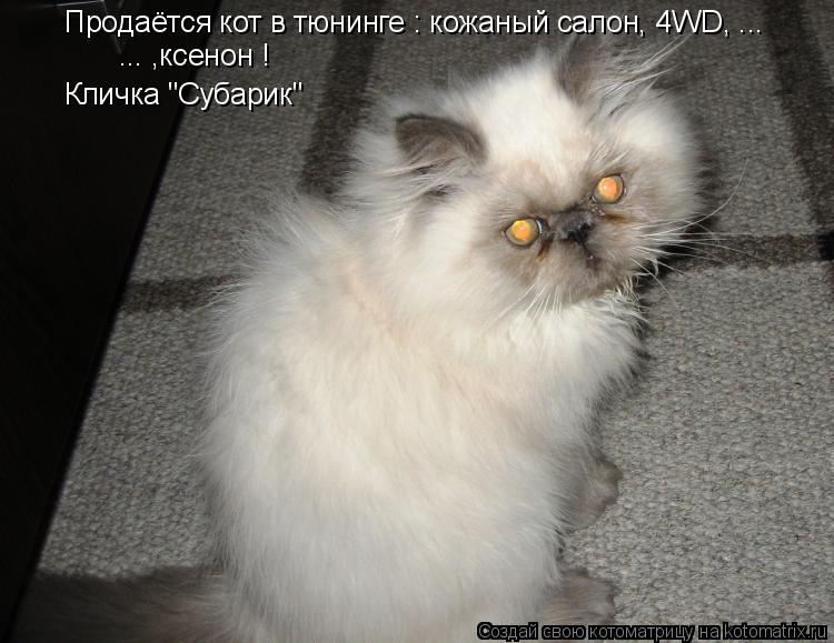 "Котоматрица: Продаётся кот в тюнинге : кожаный салон, 4WD, ... ... ,ксенон ! Кличка ""Субарик"""