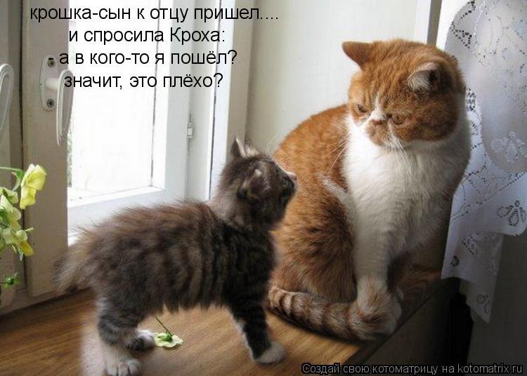 Котоматрица: крошка-сын к отцу пришел.... и спросила Кроха: - а в кого-то я пошёл? значит, это плёхо?