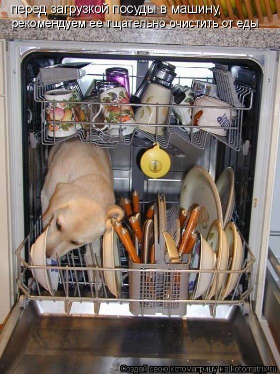 Котоматрица: рекомендуем ее тщательно очистить от еды перед загрузкой посуды в машину,