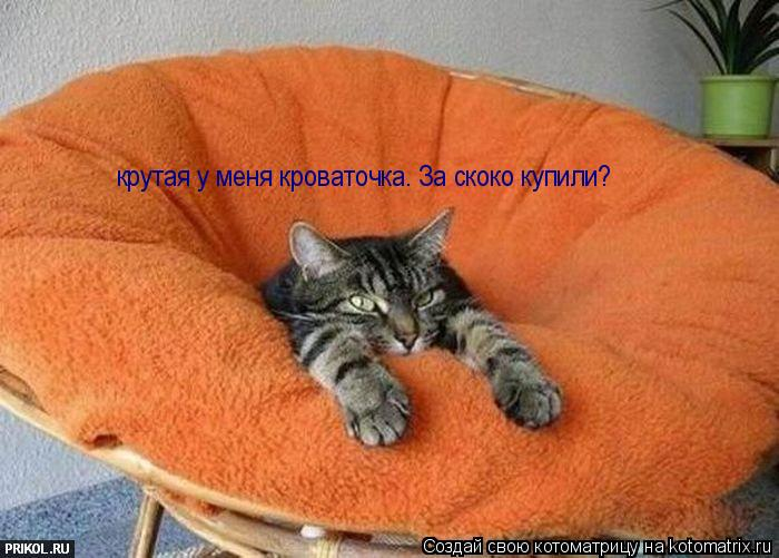Котоматрица: крутая у меня кроваточка. За скоко купили?
