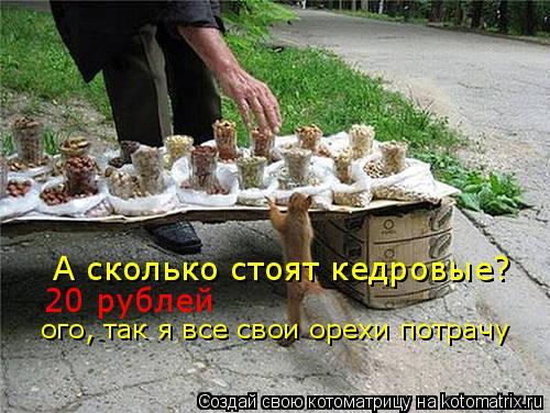 Котоматрица: А сколько стоят кедровые? 20 рублей ого, так я все свои орехи потрачу