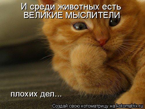 Котоматрица: И среди животных есть ВЕЛИКИЕ МЫСЛИТЕЛИ плохих дел...