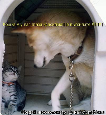 Котоматрица: Кошка:А,у вас глаза красивые!Не выгоняйте!!!!!!!!!