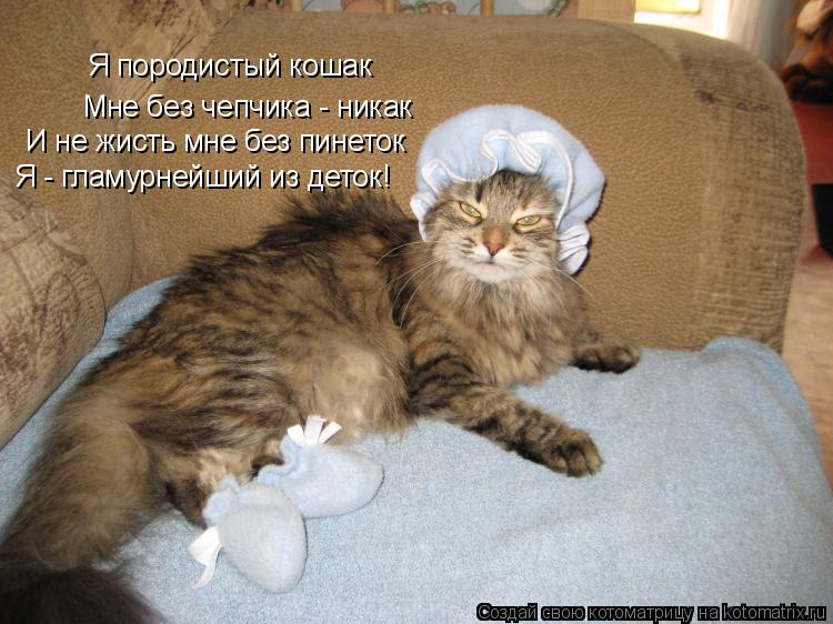 Котоматрица: Я породистый кошак Мне без чепчика - никак И не жисть мне без пинеток Я - гламурнейший из деток!