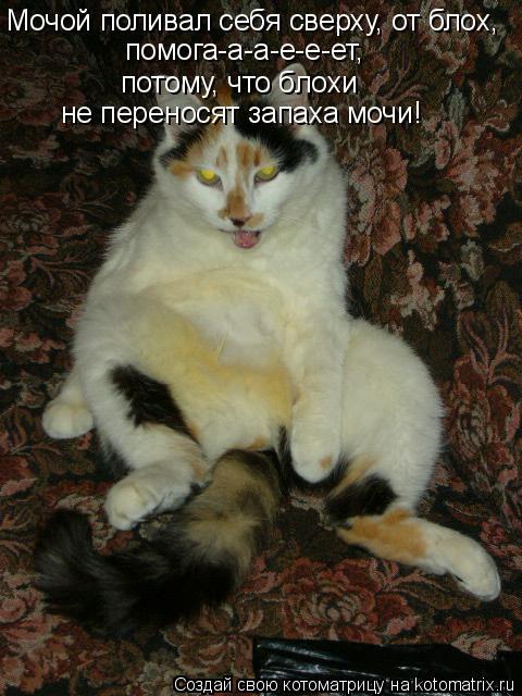 Котоматрица: Мочой поливал себя сверху, от блох, помога-а-а-е-е-ет,   потому, что блохи  не переносят запаха мочи!