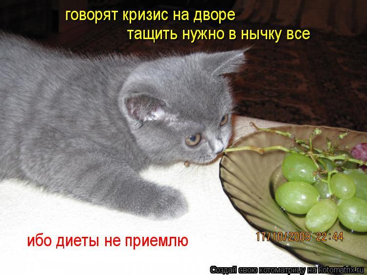 Котоматрица: говорят кризис на дворе тащить нужно в нычку все ибо диеты не приемлю