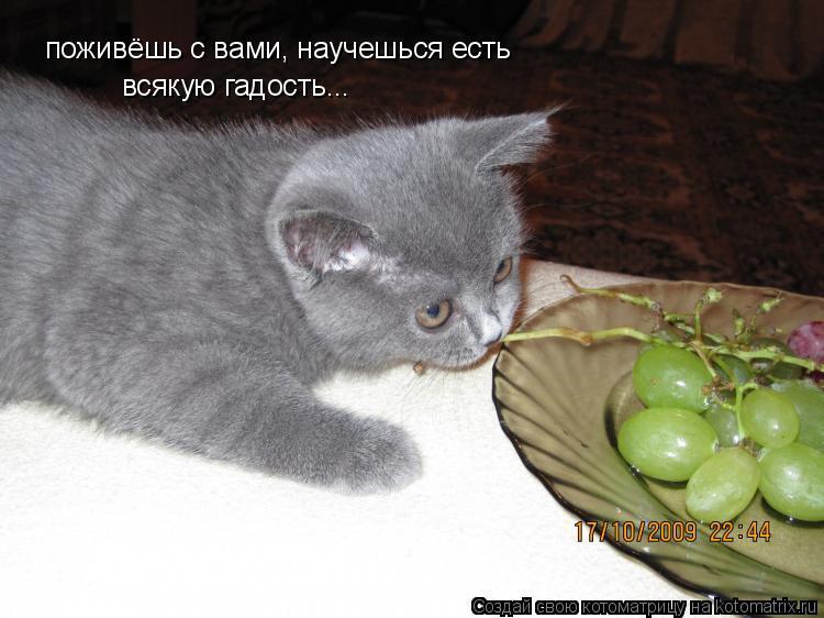 Котоматрица: поживёшь с вами, научешься есть всякую гадость...