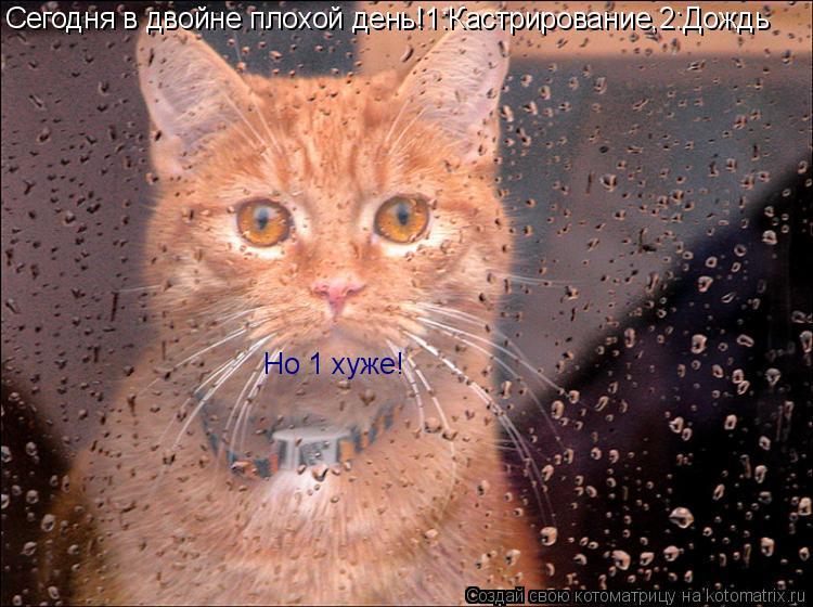 Котоматрица: Сегодня в двойне плохой день!1:Кастрирование,2:Дождь Но 1 хуже!