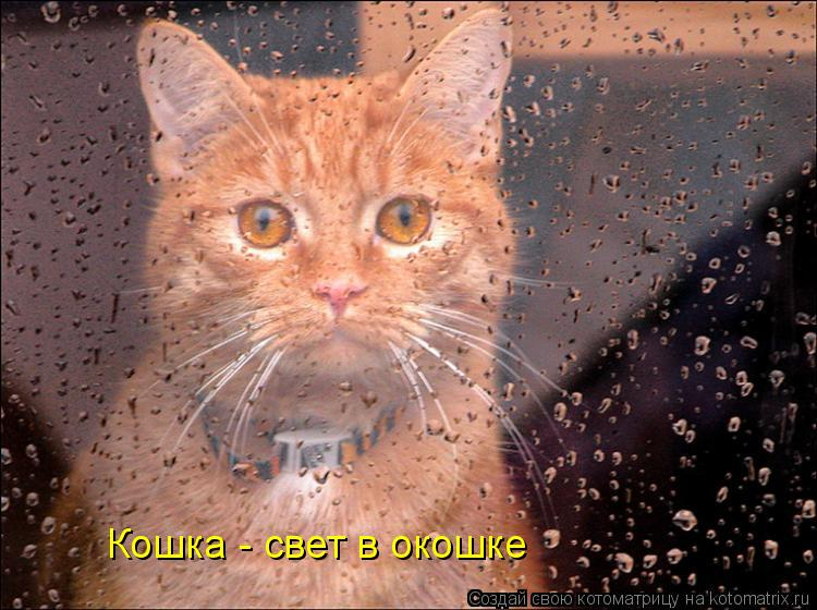Котоматрица: Кошка - свет в окошке