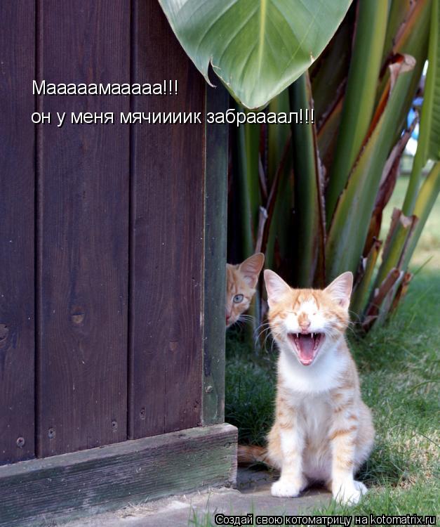 Котоматрица: Мааааамааааа!!! он у меня мячиииик забраааал!!!