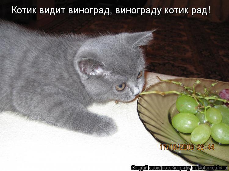 Котоматрица: Котик видит виноград, винограду котик рад!