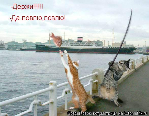 Котоматрица: -Держи!!!!! -Да ловлю,ловлю!