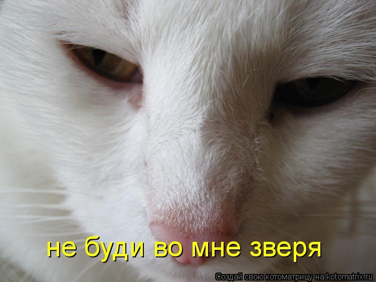 Котоматрица: не буди во мне зверя