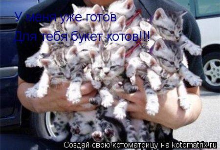 Котоматрица: У меня уже готов Для тебя букет котов!!!