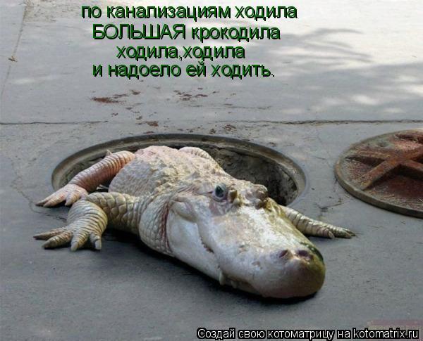 Котоматрица: по канализациям ходила по канализациям ходила БОЛЬШАЯ крокодила ходила,ходила и надоело ей ходить.