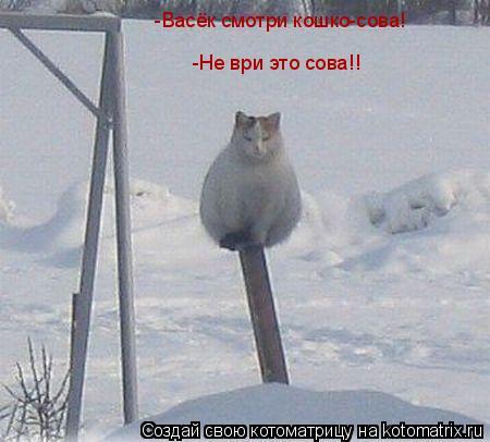 Котоматрица: -Васёк смотри кошко-сова! -Не ври это сова!!
