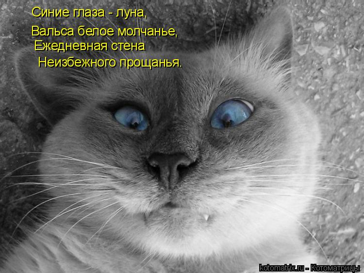 Котоматрица: Синие глаза - луна, Вальса белое молчанье, Ежедневная стена   Неизбежного прощанья.