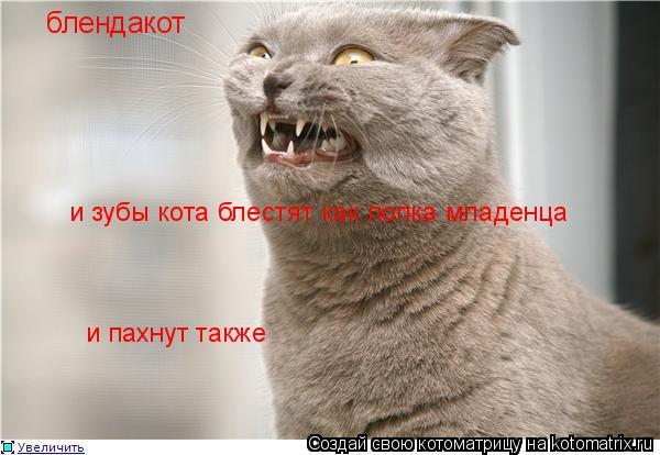 Котоматрица: блендакот и зубы кота блестят как попка младенца и пахнут также