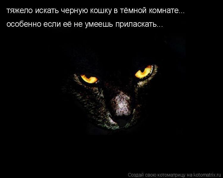 Котоматрица: тяжело искать черную кошку в тёмной комнате... особенно если её не умеешь приласкать...