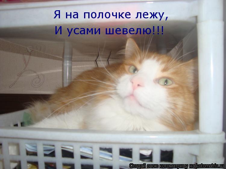 Котоматрица: Я на полочке лежу, Я на полочке лежу, И усами шевелю!!!