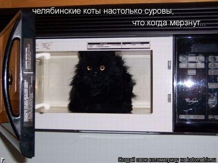 Котоматрица: челябинские коты настолько суровы, что когда мерзнут...