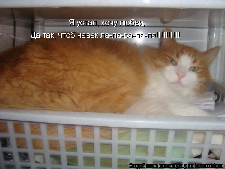 Котоматрица: Я устал, хочу любви, Да так, чтоб навек ла-ла-ра-ла-ла!!!!!!!!!!