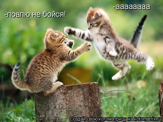 Котоматрица: -аааааааа -ловлю не бойся!