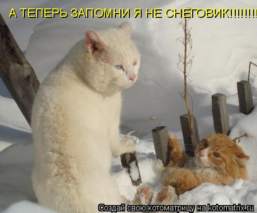 Котоматрица: А ТЕПЕРЬ ЗАПОМНИ Я НЕ СНЕГОВИК!!!!!!!!