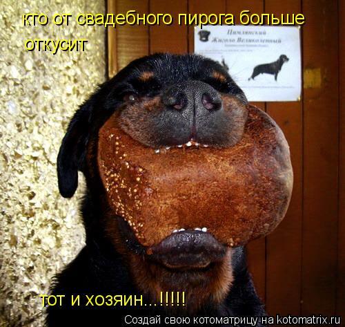 Котоматрица: кто от свадебного пирога больше  откусит тот и хозяин...!!!!!