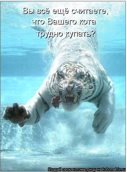 Котоматрица: Вы всё ещё считаете, что Вашего кота трудно купать?
