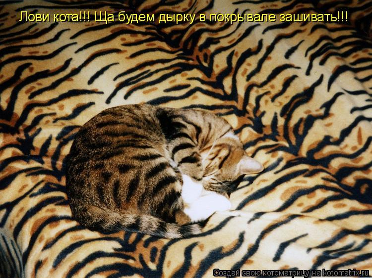 Котоматрица: Лови кота!!! Ща будем дырку в покрывале зашивать!!!