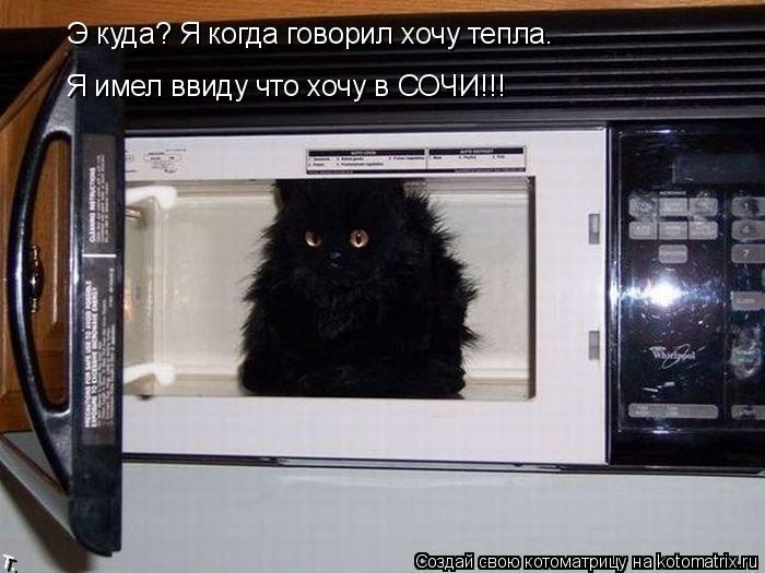 Котоматрица: Э куда? Я когда говорил хочу тепла. Я имел ввиду что хочу в СОЧИ!!!