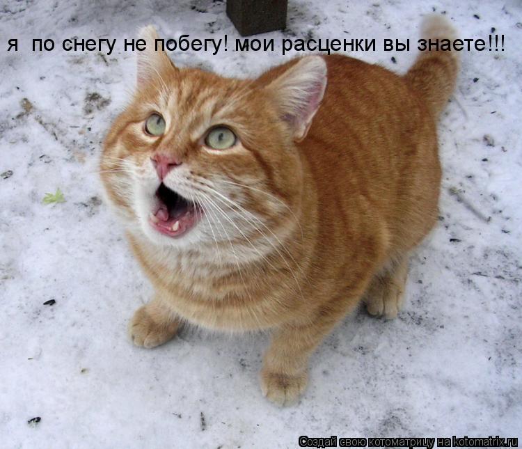 Котоматрица: я  по снегу не побегу! мои расценки вы знаете!!!