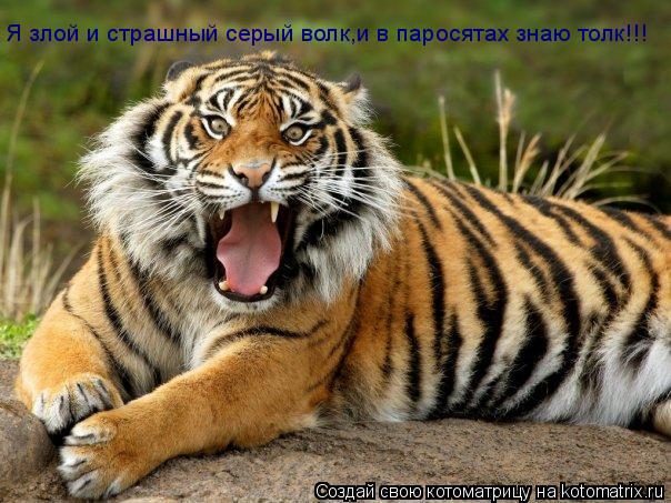Котоматрица: Я злой и страшный серый волк,и в паросятах знаю толк!!!