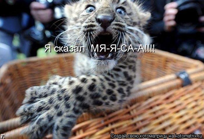 Котоматрица: Я сказал  МЯ-Я-СА-А!!!!