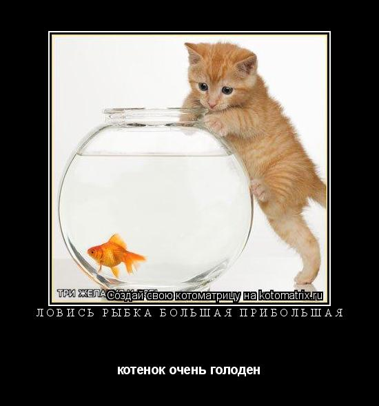 Котоматрица: ловись рыбка большая прибольшая котенок очень голоден
