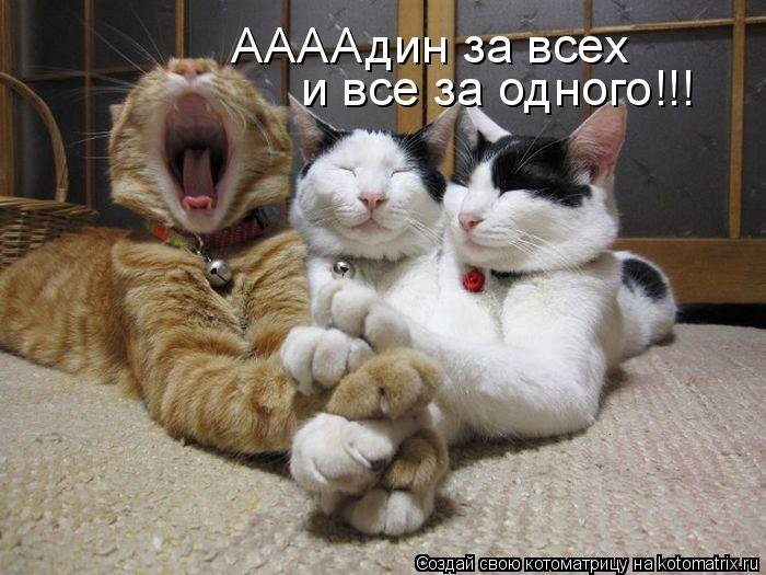 Котоматрица: АААА дин за всех и все за одного!!!