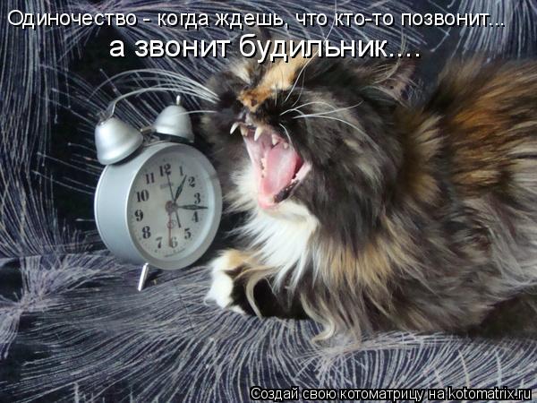 Котоматрица: Одиночество - когда ждешь, что кто-то позвонит...  а звонит будильник....