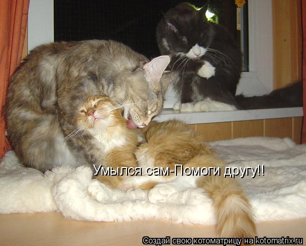 Котоматрица: Умылся сам-Помоги другу!!