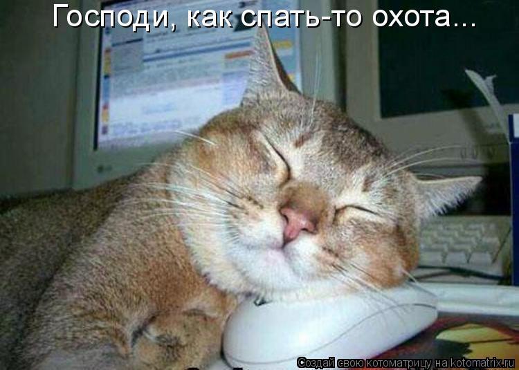 Котоматрица: Господи, как спать-то охота...