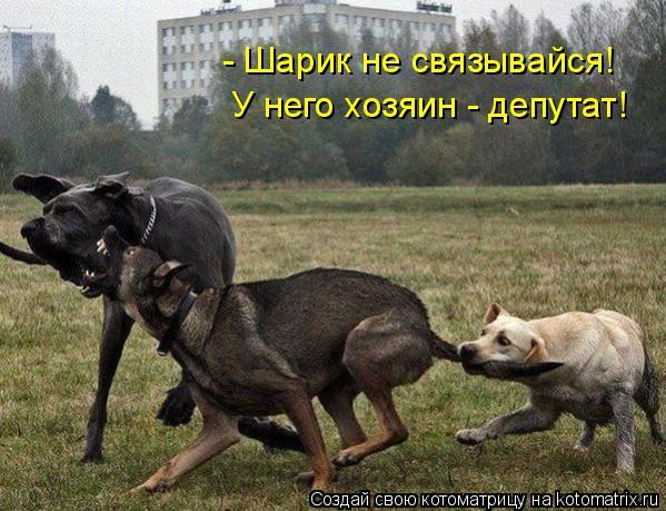 Котоматрица: - Шарик не связывайся!  У него хозяин - депутат!