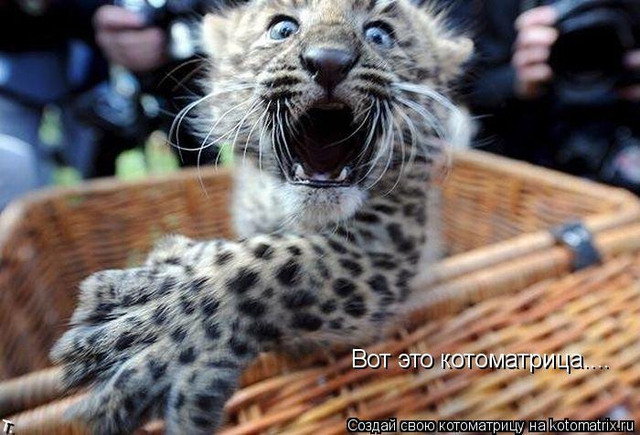 Котоматрица: Вот это котоматрица....