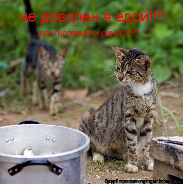 Котоматрица: не доволен я едой!!!!  хоть голодный! и худой!!!!!!!!