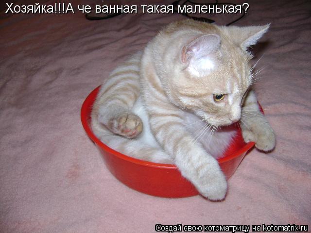 Котоматрица: Хозяйка!!!А че ванная такая маленькая?