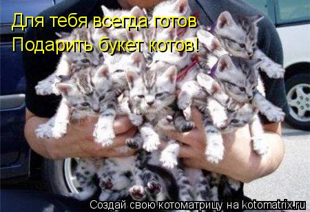 Котоматрица: Для тебя всегда готов Подарить букет котов!