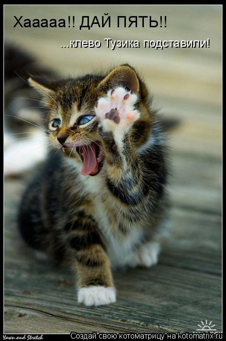 Котоматрица: Хааааа!! ДАЙ ПЯТЬ!! ...клево Тузика подставили!
