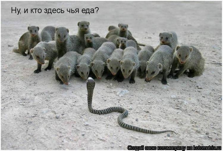 Котоматрица: Ну, и кто здесь чья еда?