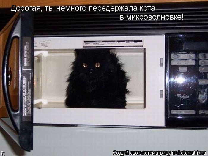 Котоматрица: Дорогая, ты немного передержала кота в микроволновке!